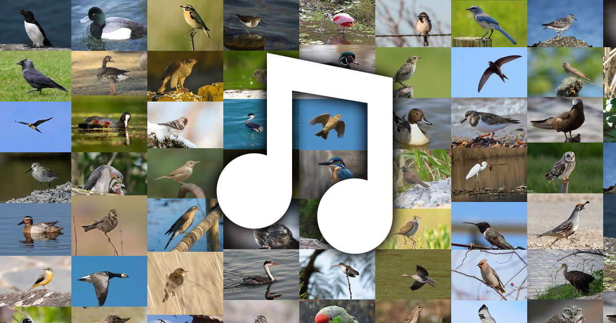 Birds That Make Noise At Night